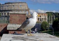 colosseum Στοκ φωτογραφία με δικαίωμα ελεύθερης χρήσης