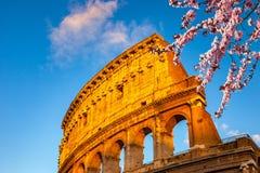 Colosseum al tramonto Fotografia Stock