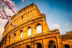 Colosseum al tramonto Immagini Stock