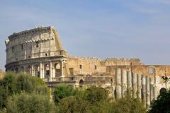 Colosseum attraverso gli alberi immagine stock