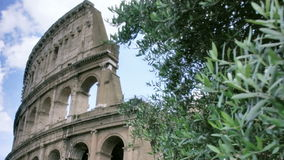 Colosseum behind Olive Tree in Rome Italy stock footage