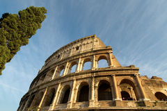 Colosseum and cypress Royalty Free Stock Photos