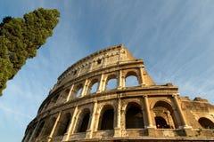 Colosseum et cyprès Photos libres de droits