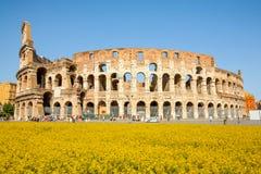 Colosseum famoso in cui le lotte dei gladiatori sono state tenute Immagini Stock