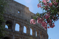 Colosseum monument. In Rome,Italy Stock Image