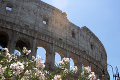 Colosseum monument. In Rome,Italy Royalty Free Stock Images