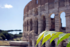 Colosseum monument. In Rome,Italy Royalty Free Stock Photography