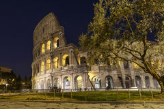 Colosseum at night, Rome, Italy. Colosseum at night with olive tree, Rome, Italy Royalty Free Stock Photo