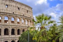 Colosseum o Colosseo a Roma, Italia con le palme ed il cielo blu Immagine Stock