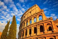 Colosseum och träd på solnedgången, Rome, Italien royaltyfria bilder