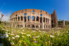 Colosseum pendant le printemps, Rome, Italie Photo stock