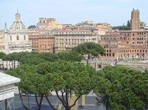 Colosseum a Roma, Italia Vista attraverso gli alberi di cipresso Immagini Stock
