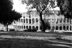 The Colosseum - Roma - Italy Royalty Free Stock Photo