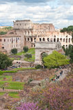 Colosseum from roman forum Stock Photography