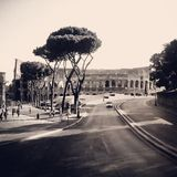 Colosseum. The  Colosseum in rome Stock Images