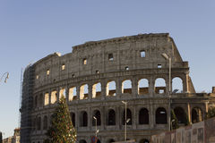 Colosseum in Rome with a Christmas Tree Royalty Free Stock Images