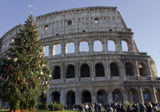 Colosseum in Rome with a Christmas Tree Royalty Free Stock Photos