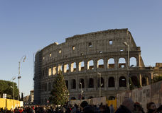 Colosseum in Rome with a Christmas Tree on its side and people Royalty Free Stock Photography
