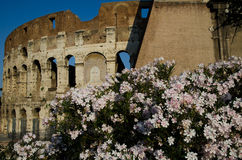 Colosseum in Rome, Italy. Famous landmark in Rome, Italy Stock Photos