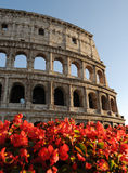 Colosseum Rome Italy. Blooms in front of the Colosseum in summer royalty free stock image