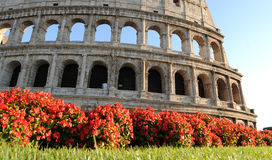 Colosseum Rome Italy. Blooms in front of the Colosseum in summer Royalty Free Stock Photography