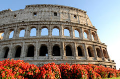 Colosseum Rome Italy. Blooms in front of the Colosseum in summer Stock Image