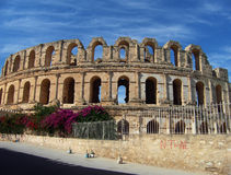 Colosseum in Rome. Italy, Europe royalty free stock images
