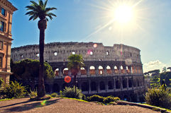 Colosseum Rome Palm tree Stock Photo