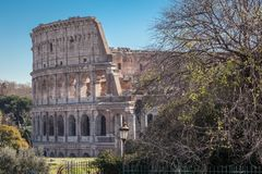 Colosseum, Rome. View of Colosseum ruins with a tree in a foreground and blue sky on a sunny summer day Stock Images