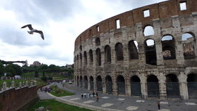 The Colosseum and the Seagull Royalty Free Stock Photography