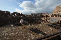 Colosseum, sky, bird, city, beak. Colosseum is sky, beak and breakwater, groin, groyne, mole, bulwark, seawall, jetty. That marvel has bird, quail and partridge royalty free stock images