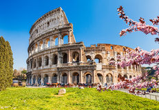 Colosseum at spring Stock Photos