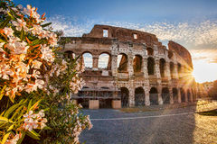 Colosseum during spring time, Rome, Italy Stock Images