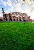 Colosseum at sunset in Rome, Italy. Ruins of antique Colosseum in sunise lights at spring day, Rome Italy Stock Photography