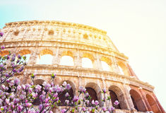 Colosseum at sunset in Rome, Italy Stock Images