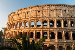Colosseum at sunset in Rome, Italy. Ruins of Colosseum with palm tree at sunrise in Rome, Italy Stock Photos