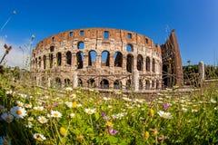 Colosseum under vårtid, Rome, Italien Arkivfoto