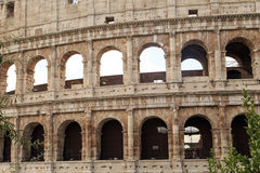 Colosseum View with Trees Royalty Free Stock Photography