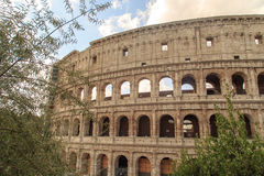 Colosseum View with Trees Royalty Free Stock Images