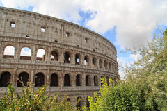 Colosseum View with Trees Royalty Free Stock Photo