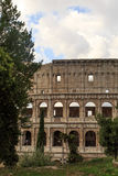 Colosseum View with Trees Stock Image