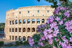 Colosseum w Rzym przy wschodem słońca z Purpurowymi kwiatami Zdjęcia Stock