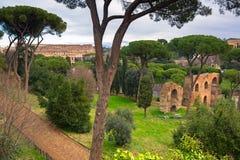 Colosseum widok od Palatino wzgórza w Rzym, Włochy fotografia stock