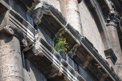Colosseum zakończenie up Obraz Stock