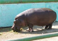 Colosso in giardino zoologico Fotografia Stock