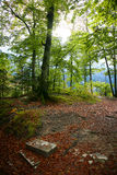 Colouful träd i en Autumn Day Royaltyfri Fotografi