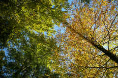 Colouful Tree in a Autumn Day Stock Photography