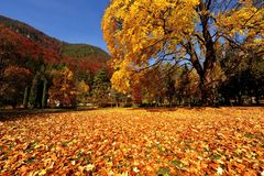 Colour autumn Royalty Free Stock Photos