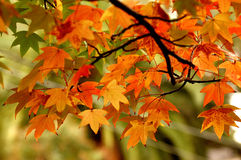 Colour of autumn Stock Photography