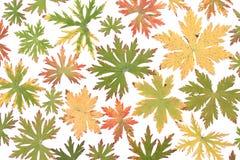 Colour autumn sheet background Royalty Free Stock Photos